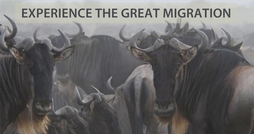 Experience the Great Migration